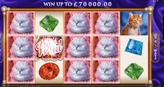 Der Pretty Kitty Slot von Microgaming